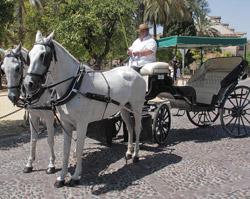 Coches de caballos en Córdoba