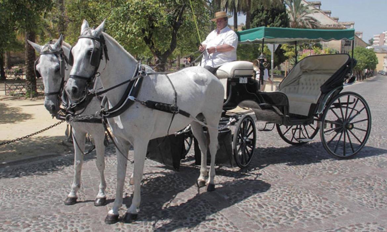 Coches de caballos en Córdoba (España)