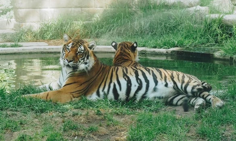 El zoológico  de Córdoba