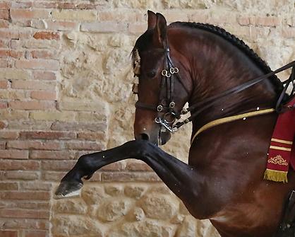 Caballo de Pura Raza Española (Córdoba - España)
